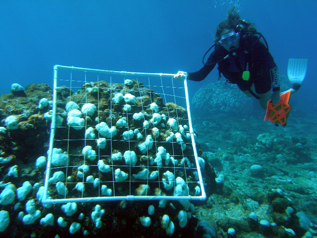 NOAA 200th: Foundation: Coral Reef Conservation: Diver ...
